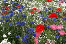 Blommor för skuggiga platser