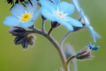 Great flower shots