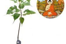 Pohon Peneduh / Semua tanaman dalam board ini bisa dikirim keseluruh Indonesia, silahkan order ya, tel: 0341-599399 I SMS center: 08569020300 atau kunjungi website kami www.kebunbibit.id
