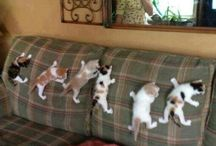 Funny Kitties / by Piper Erhardt