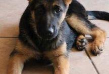 Dog I want