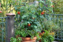 Balkónová záhrada
