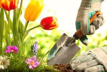 Gardening / by Alicia Palma-Espinoza