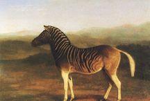 zebra quagga