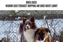Hundeblogs / Fundstücke von tollen anderen Blogs rund um den Hund.