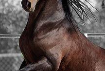 Hester ❤️❤️