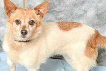 CARE Adoptable Dogs