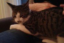 Mijn kitten, Keessie