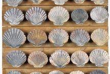 scallop shell ideas