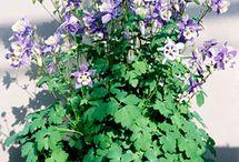 Garden - our plants