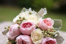 Természet - virágok
