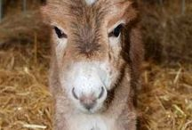 Donkey Love / Donkeys are such beautiful animals, not only cute but clever and hardworking!
