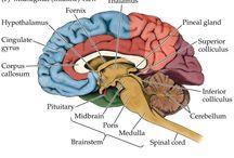 Neurology and Neurosurgery Nursing