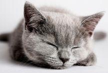 Kittens! / by Hayley Gordillo