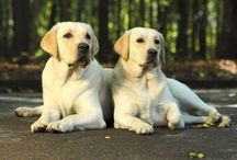 Interesting dog facts / Various interesting dog facts every dog lover should know. Join us on http://2puppies.com