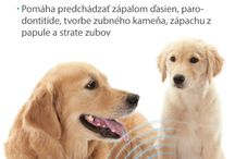 Dentálna hygiena u zvierat