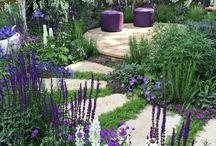 Barvy v zahradě