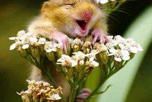 Muizen in planten