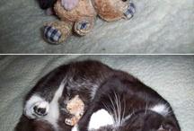 Oh So Cute Animals