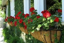jardineiras