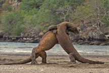 """KomodoTop 