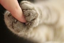 macska szeretet
