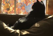 Gatti! ❤