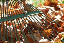 Autumn tips to do