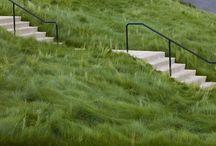 Grass creeping red fescue