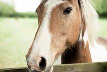 Horses / by Elise Nance
