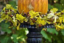 fall / by Sarah Roberts