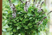 Outdoor - Plants to buy