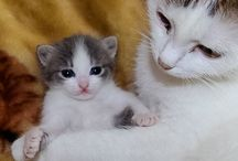 CATS!!!favorites