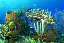 onder water