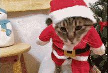gatos en movimientos papá Noel