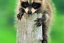 animals / by Elisabeth Doherty