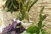 rośliny_ na wymianę