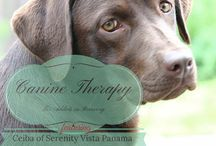 Canine Therapy - Drug Rehab Addiction Treatment / Dogs love people recovering from addiction. Having a dog in drug rehab addiction treatment helps people to heal. Private pay drug rehab Serenity Vista has an amazing, beautiful, charming and delightful canine therapist. Her name is Ceiba. Everybody loves chocolate, and she is delicious!!!! www.serenityvista.com