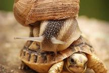 Turtles / by Michelle Crane
