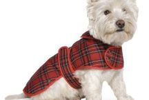 Coated Canines / Keep your pooch warm or dry; or both!