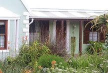Cape fynbos garden