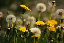 Jardinería y paisajismo / Descubre en este tablero todo sobre las ultimas tendencias en jardineria y paisajismo. Trucos, consejos y guias sobre construccion y mantenimiento de areas verdes.