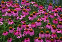 flowers for landscaping