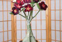 bonsai-flori-captus