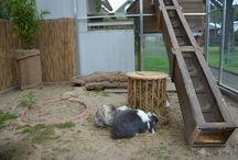 Kaninchenauslauf