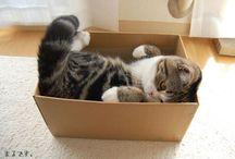 Adorkable Cats