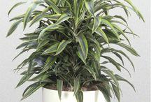 plantas / by mariangeles diaz santos