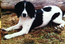 Dogs in the Wilderness / All of our furry friends here at the resort! / by Clayoquot Wilderness Resort