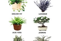 Plants for interior design