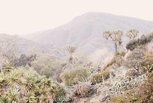 Desert / by Kristine Roy